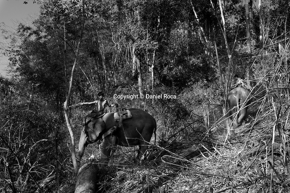 Elephants are used to transport the felled logs. Forest Village, between 16 and 17 miles from Taungoo. Myanmar, February 2014.
