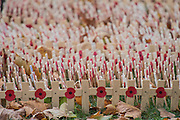 Hundreds of individual hand-written crosses - The Duke of Edinburgh, Life Member, Royal British Legion, accompanied by Prince Harry, visit the Field of Remembrance at Westminster Abbey  - 10 November 2016, London.