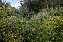 Wildflowers sit alongside a wildlife path at Calvert Jubilee Nature Reserve on 27 July 2020 in Calvert, United Kingdom. On 22nd July, the Berks, Bucks and Oxon Wildlife Trust (BBOWT) reported that it had been informed of HS2's intention to take possession of part of Calvert Jubilee nature reserve, which is home to bittern, breeding tern and some of the UK's rarest butterflies, on 28th July to undertake unspecified clearance works in connection with the high-speed rail link.