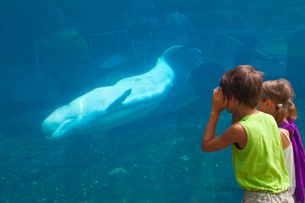 351021-1042G.Huey ~ Copyright: George H.H. Huey ~ A young boy and girl watching the live Beluga whales at the Mystic Aquarium.  Mystic, Connecticut.