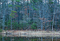 A view looking across a lake into a mixed hardwood and pine forest, Winter, Southern Maryland
