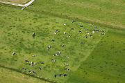 Nederland, Zuid-Holland, Gemeente Zederik, 12-06-2009; Polder Middelkoop, zwartwitte Holsteiner koeien grazen en zonnen in het weiland, schrikdraad zorgt er voor dat het rechter weiland niet begraasd wordt;.black and white Holstein cows grazing in the meadow, fence ensures that the right pasture is not grazed.luchtfoto (toeslag), aerial photo (additional fee required).foto/photo Siebe Swart