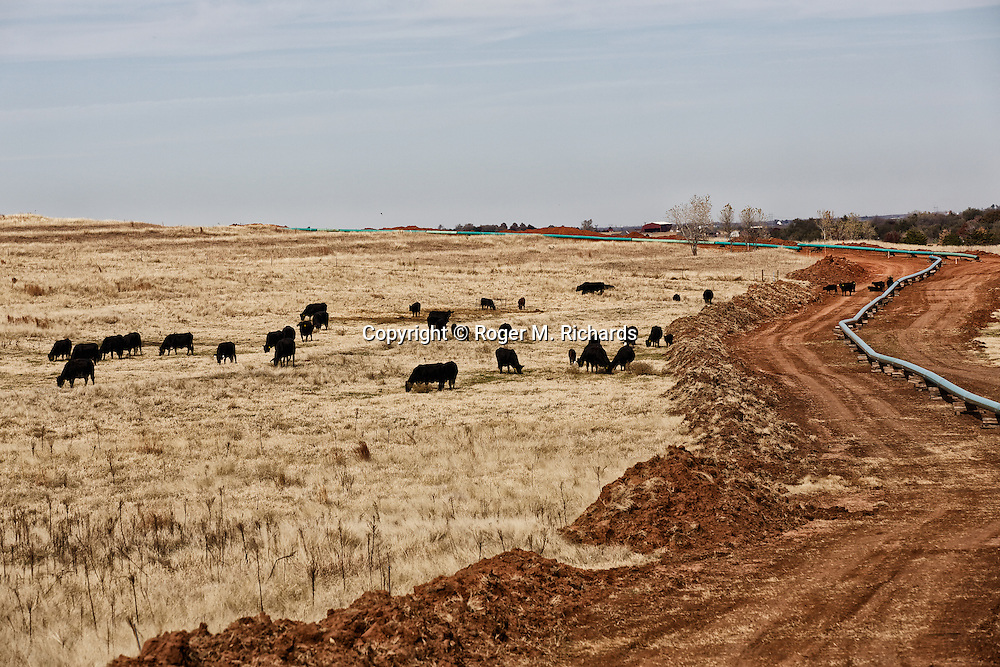 A herd of cattle graze near an oil pipeline under construction in southwest Oklahoma. A boom in oil and gas drilling across the American West has led to pollution and environmental problems in what were once pristine lands. Traveling rigs go from location to location, drilling down into the shale rock, and are soon followed by pumps that inject a toxic brew of water and chemicals for hydraulic extraction or 'fracking' of oil and gas. Photograph by Roger M. Richards