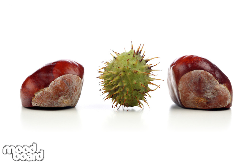 Chestnut on white background - studio shot