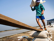 "28 MARCH 2014 - NA KHOK, SAMUT SAKHON, THAILAND:  Burmese migrant laborers load a truck with bags of salt on a Thai salt farm in Samut Sakhon province. Thai salt farmers south of Bangkok are experiencing a better than usual year this year because of the drought gripping Thailand. Some salt farmers say they could get an extra month of salt collection out of their fields because it has rained so little through the current dry season. Salt is normally collected from late February through May. Fields are flooded with sea water and salt is collected as the water evaporates. Last year, the salt season was shortened by more than a month because of unseasonable rains. The Thai government has warned farmers and consumers that 2014 may be a record dry year because an expected ""El Nino"" weather pattern will block rain in mainland Southeast Asia. Salt has traditionally been harvested in tidal basins along the coast southwest of Bangkok but industrial development in the area has reduced the amount of land available for commercial salt production and now salt is mainly harvested in a small parts of Samut Songkhram and Samut Sakhon provinces.   PHOTO BY JACK KURTZ"