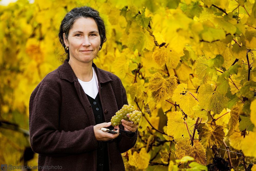 Loretta Zanatta picking grapes at Zanatta winery near Duncan, BC.