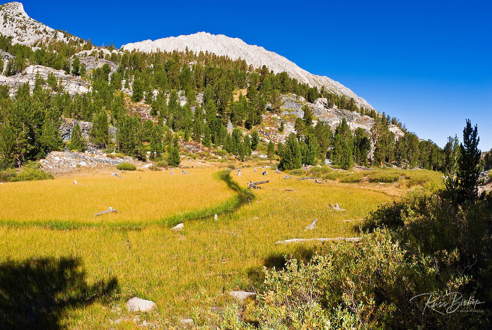 Stream winding through meadow in Little Lakes Valley, John Muir Wilderness, Sierra Nevada Mountains, California