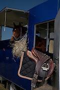 Mädchen und Frauen mögen Pferde: Reiterinnen, Zuschauer und Mitarbeiterinnen beim Pferderennen im Greyerz. Les filles aiment les chevaux: course de chevaux en Gruyère. © Romano P. Riedo
