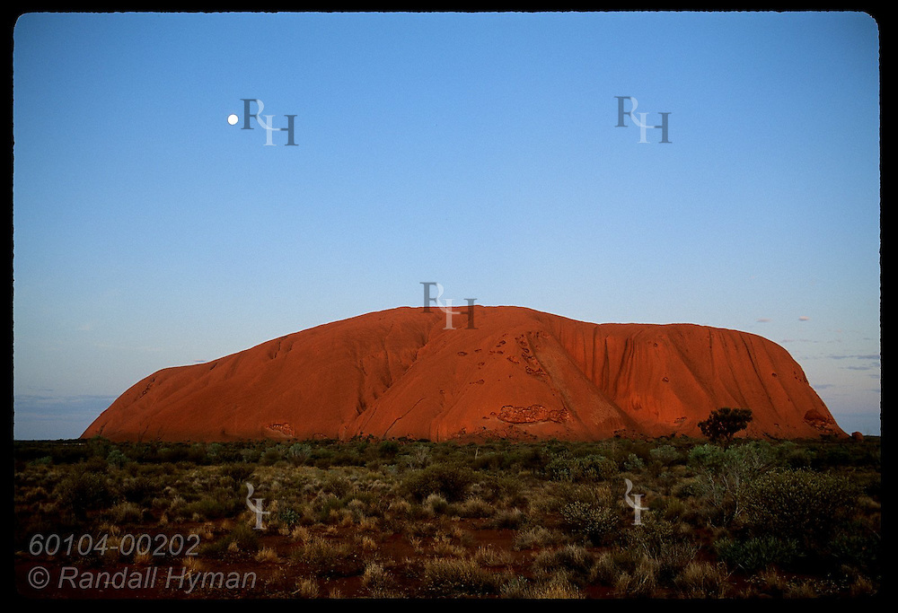 Moon rises over Ayers Rock as the sandstone monolith glows orange in desert's twilight; Uluru NP. Australia