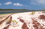 Aldabra Atoll, The Seychelles<br /> Beach with lines of red leaves and lagaoon<br /> c. Ellen Rooney