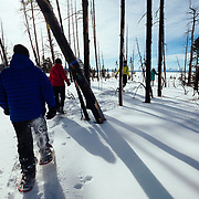 Clients snow shoe amonst the burnt wildfire trees near Yellowstone Lake in winter.