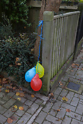 Three colours deflated balloons tied to a garden fence, weeks after a party, on 16th November 2017, in London, England.