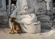 A puppy sits in the yard of a Buddha statue factory in Mandaly, Myanmar.