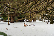 Maidenhead, United Kingdom.  General View Raymill Island Winter Snow. Banks of the River Thames. <br /> <br /> Friday  02/03/2018 <br /> <br /> © Peter SPURRIER,<br /> <br /> Leica Camera AG  LEICA M (Typ 262)  1/125 sec. 50 mm f4.8. ISO 320 .  26.3MB