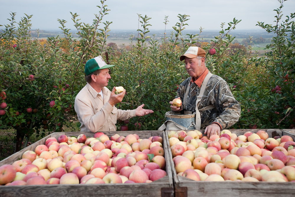 Farmers eating apples and talking in apple orchard