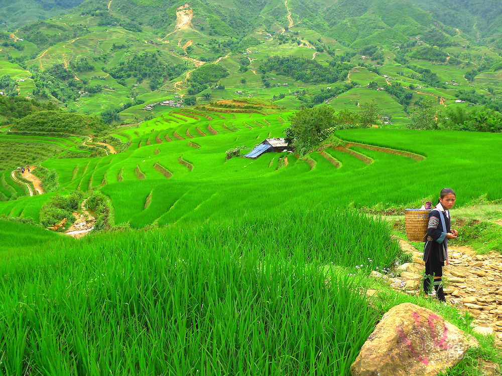 Young Black Hmong girl close to rice fields at Sa Pa