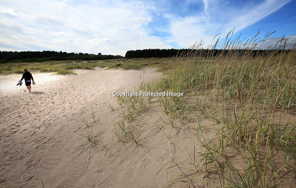 Sand dunes Tentsmuir forest Fife. 2015.Photograph David Cheskin