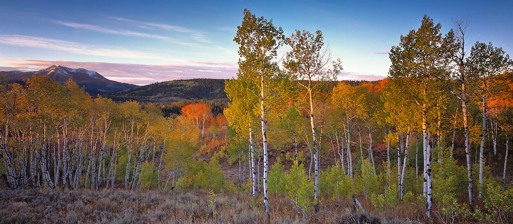 Snow covered Caribou Peak rises above aspen trees in fall foliage in the Cache National Forest.