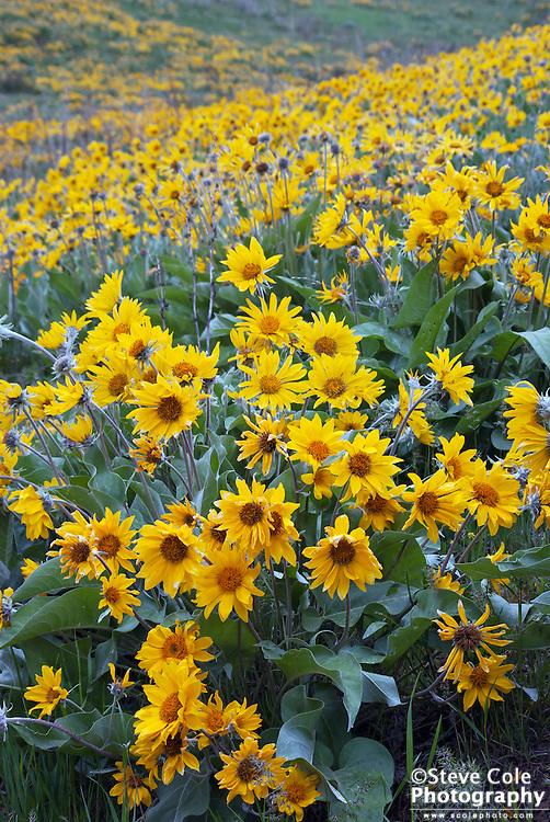 Flowers near and far - Ollala Canyon