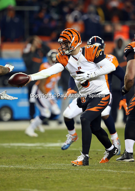 Cincinnati Bengals quarterback AJ McCarron (5) hands off the ball on a running play during the 2015 NFL week 16 regular season football game against the Denver Broncos on Monday, Dec. 28, 2015 in Denver. The Broncos won the game in overtime 20-17. (©Paul Anthony Spinelli)