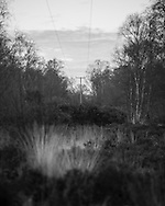 Power lines stretch through a gap in the trees at Whitmoor Common near Guildford, Surrey, UK. Photo copyright Andrew Tobin http://tobinators.com