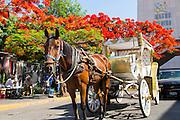Horse and carriage, Guadalajara, Jalisco, Mexico