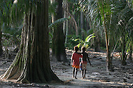 Children walk through the devastated crop gardens (destroyed by salt water flooding) on Puil Island, Carteret Atoll, Papua New Guinea, on Sunday, Dec. 10, 2006. Rising sea levels have eroded much of the coastlines of the low lying Carteret islands (situated 80km from Bougainville island, in the South Pacific), and waves have crashed over the islands flooding and destroying what little crop gardens the islanders have. Food is in short supply, banana and swamp taro crops are failing due to the salt contamination of the land, and the islanders live on a meagre one meal per day diet of fish and coconut. There is talk by the Autonomous Region of Bougainville government to relocate the Carteret Islanders to Bougainville island, but this plan is stalled due to a lack of finances, resources, land and coordination.