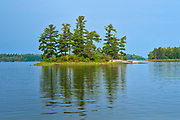 White pine (Pinus strobus) trees on island in Lake of the Woods, a few kilometers Northeast of Deadbroke Island<br />