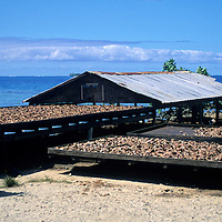 Oceania, South Pacific, French Polynesia, Tahiti, Taha'a. Husks of coconuts are spread in the sun to air dry for processing.