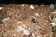 Compost bin. Domestic waste decomposes over time to be recycled as compost.