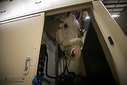 Cornet D'Amour<br /> Departure of the horses to the World Cup Finals in Las Vegas from Schiphol - Amsterdam 2015.<br />  © Hippo Foto - Dirk Caremans
