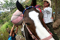 Bags of coca leaves are tied on top of a mule in El Rosario, Nariño, in southwestern Colombia, on July 15, 2008. Nariño is a one of Colombia's most troubled departments; with wide spread coca cultivation and the presence of illegal armed groups vying for control of the coca business. (Photo/Scott Dalton)
