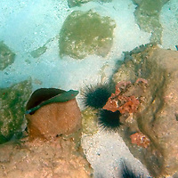 Central America, Saint Vincent and the Grenadines, Bequia. Underwater scenes of snorkeling in the island of Bequia, Saint Vincent and the Grenadines.