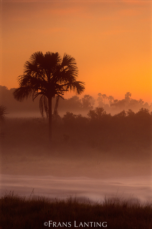 Savanna at dawn, Emas National Park, Brazil