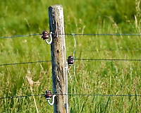 Old Powerline in a Rural Section of the Kiel Canal. Image taken with a Nikon 1 V2, FT1 adapter, and 80-400 mm VRII lens (ISO 200, 400 mm, f/6.3, 1/500 sec). Transiting the Kiel Canal in Germany on the MV Explorer. Semester at Sea Spring 2013 Enrichment Voyage.
