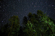 A starry night in the Umpqua National Forest, Oregon.