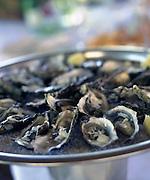 Oysters, Le Domaine de Foncaudiere, France