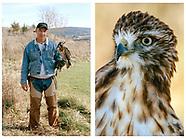 American Falconer