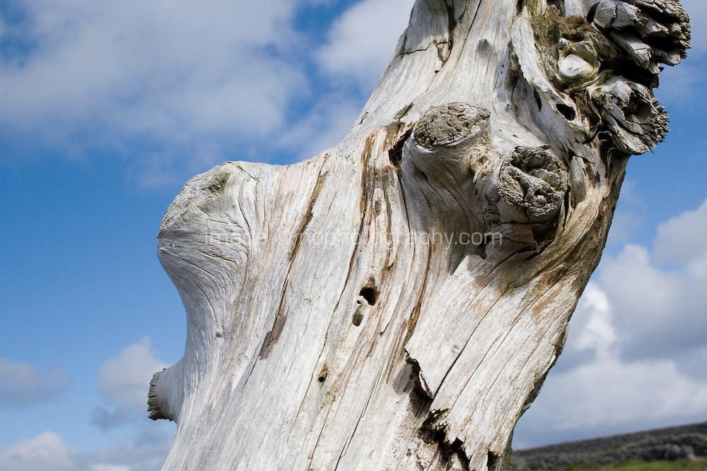 driftwood on Inis Oirr Island the Aran Islands County Galway Ireland