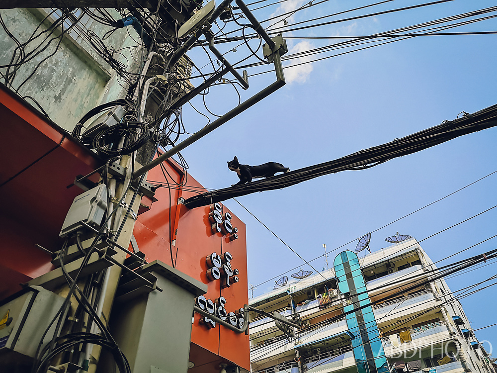 Black cat on wires in Yangon Myanmar