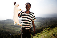 Africa Rabbits