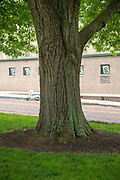 college green, Mapp Athens, Tree Tour, red oak