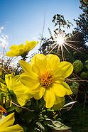 2012 Denver Botanic Gardens