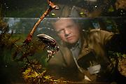 Lars Hendrich - Staatssammlung München - Wasserkäfer - beobachtet den Schwarzer Kolbenwasserkäfer  (Hydrophilus aterrimus) beim fressen einer Kaulquappe