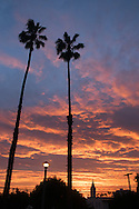 Photo sunset wall art. Santa Monica bright orange and blue sky, palm trees, beach life. Matted print, Westside, Venice, Los Angeles, Southern California photography. Fine art photography limited edition.