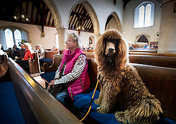 © Licensed to London News Pictures. 06/10/2019. Selsey, UK. Irish Water Spaniel Moses sits with his owner during the annual Service of Blessing of Animals at St Peter's Church in Selsey, West Sussex. Parishioners bring their pets to the church for the annual service after earlier attending a Harvest Festival celebration. Photo credit: Peter Macdiarmid/LNP