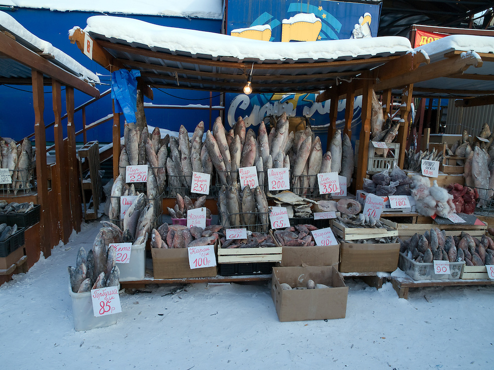 Stall with standing deep-frozen fish on the Yakutsk outdoor fish market. Yakutsk is a city in the Russian Far East, located about 4 degrees (450 km) below the Arctic Circle. It is the capital of the Sakha (Yakutia) Republic (formerly the Yakut Autonomous Soviet Socialist Republic), Russia and a major port on the Lena River. Yakutsk is one of the coldest cities on earth, with winter temperatures averaging -40.9 degrees Celsius.
