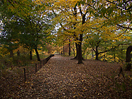 Autumn colors at The Great Hill in Central Park