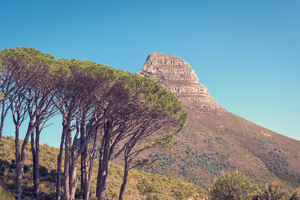 Cape Town, South Africa is home to Lion's Head mountain.  It is located between Signal Hill and Table Mountain.  The slopes of Lion's Head is a popular launching point for paragliders.
