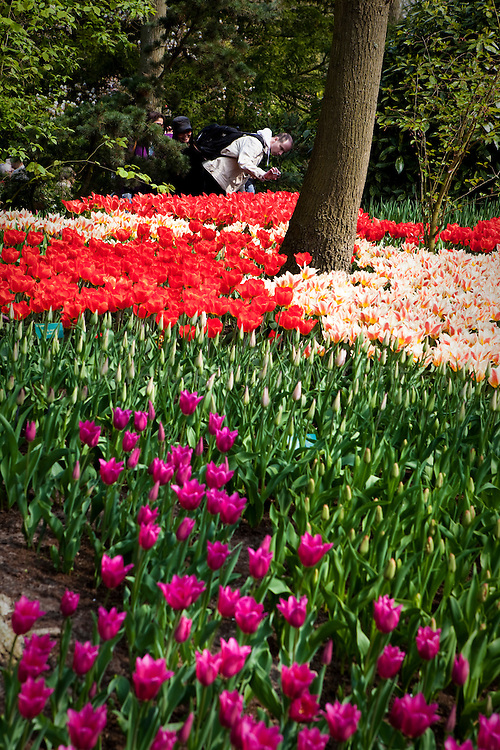 Photographing flowers at the Keukenhof tulip and flower show in Lisse, Holland - Netherlands Editorial Use only.